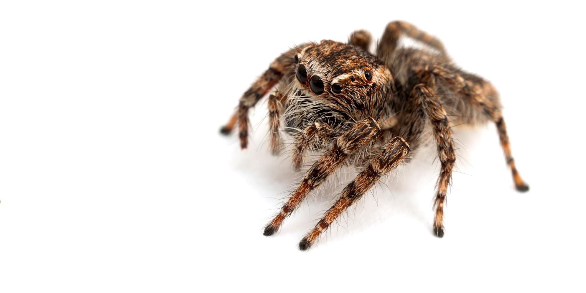 charleston_pest_control_spider